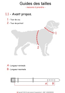 guide-taille-grand-chien