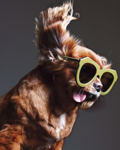 toast-lunettes-soleil-campagne-karen-walker-ete-2015-4