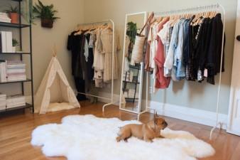 dog-bedroom